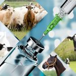 List of Veterinary Injection Manufacturers in India
